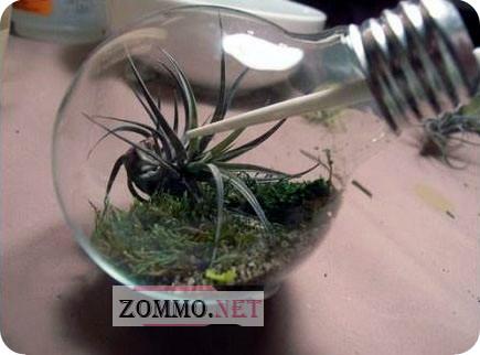 Мини-террариум из лампочки