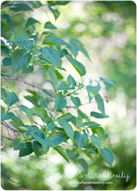 Зеленые веточки