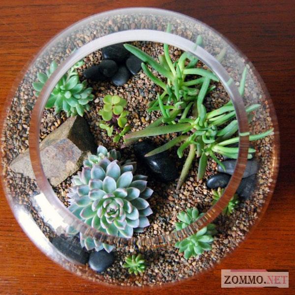 Террариум для растений домашний