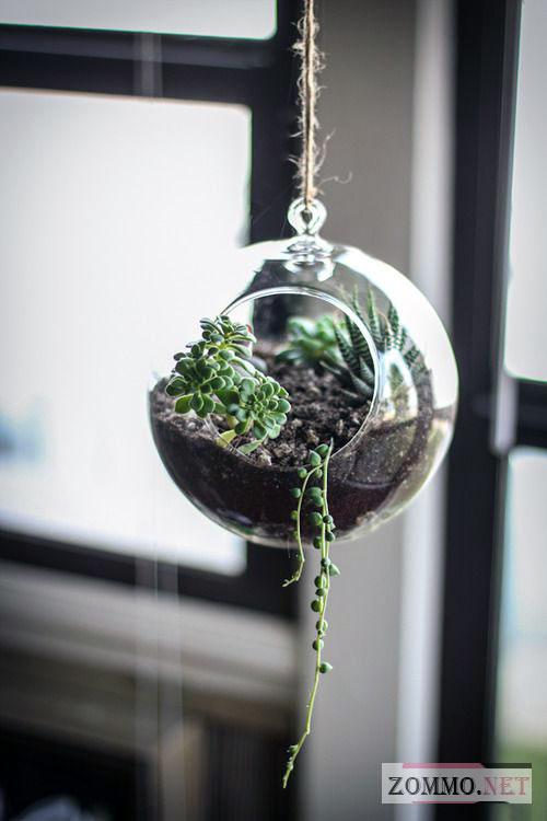 Креативный террариум для растений