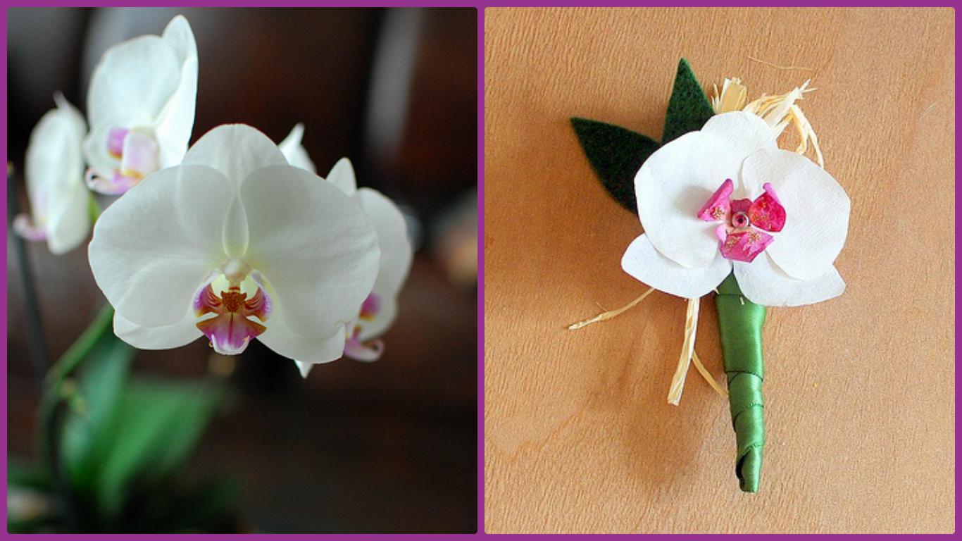 Орхидея из бумаги и живая орхидея