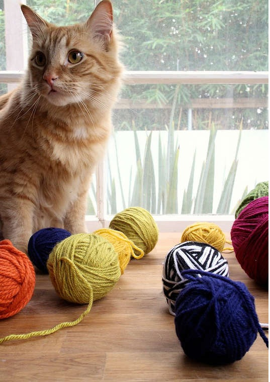 Игрушки для кошек своими руками: необычный клубок