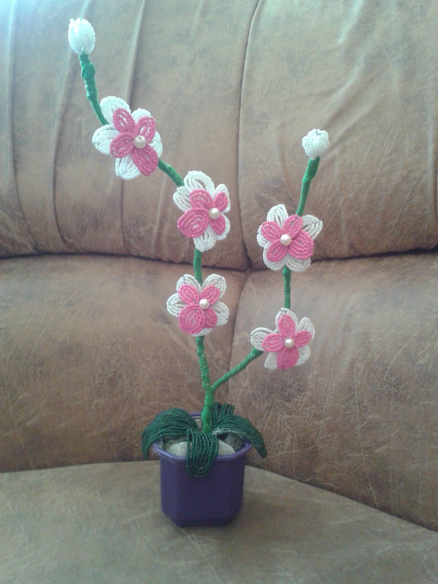 Бисерная орхидея