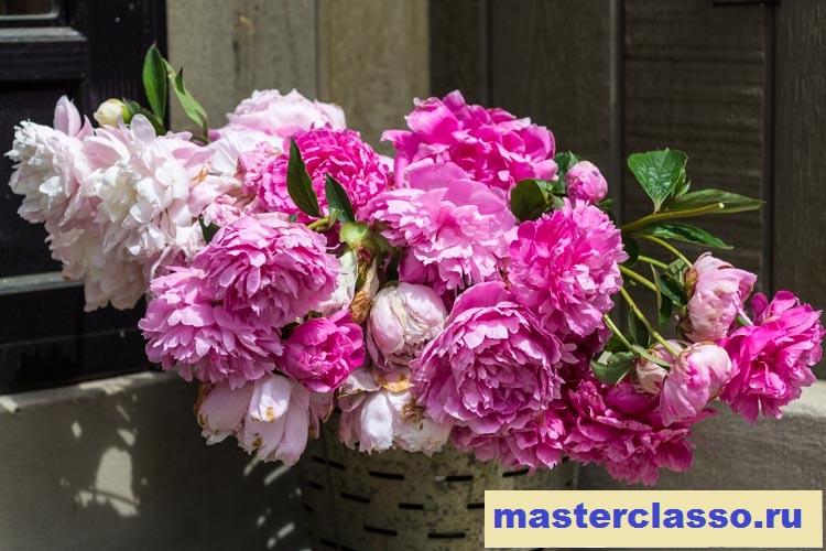 Венок из цветов - срежьте пионы