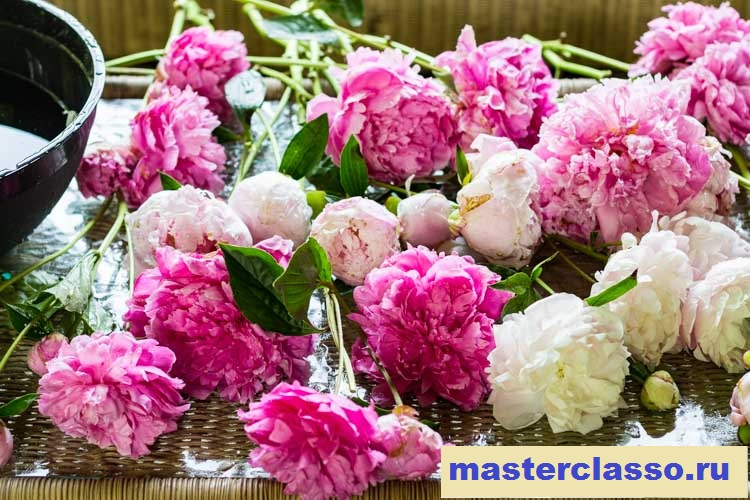 Венок из цветов - разложите пионы на столе
