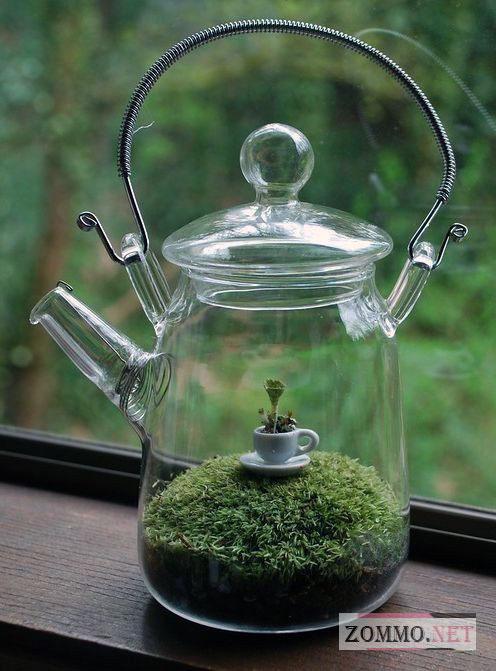 Террариум в старом прозрачном чайнике