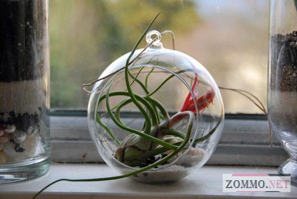 Растение в шаре