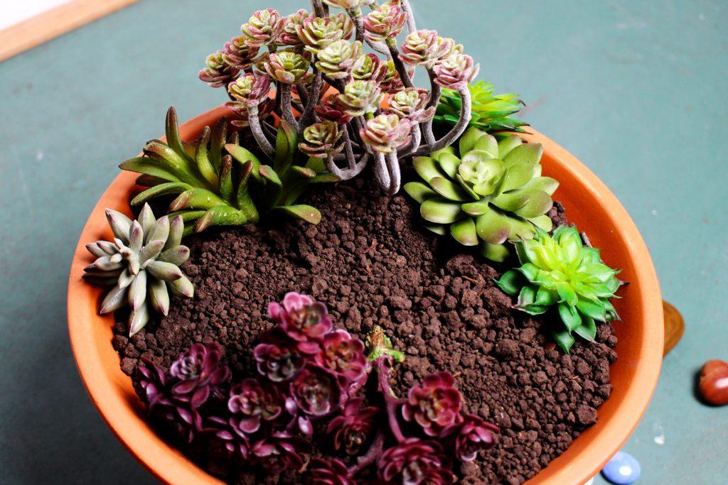 Композиции из суккулентов - расставьте красиво растения